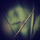 Damselfly  by Joshua Greiner