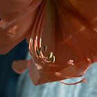 Amaryllis Up Close by Barry Doherty