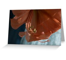 Amaryllis Up Close Greeting Card