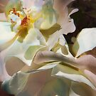 White Roses by Tama Blough