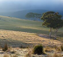 Morning Sun, Omeo. by Julia Nance