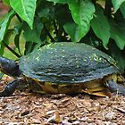 Side View Of A Turtle by Cynthia48