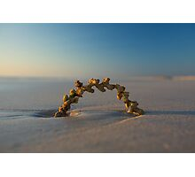 Seaweed Arc - Cable Beach - Broome WA Photographic Print