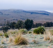 Omeo Mornings. by Julia Nance