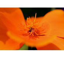 Poppy Orange Photographic Print