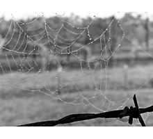 Wet Chilly Web Photographic Print
