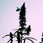 In Flight, A by MeParadise