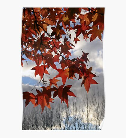 The transition of Autumn and Winter Poster