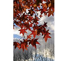 The transition of Autumn and Winter Photographic Print