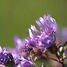 Purple Wild Flowers by Lorelle Gromus