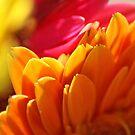Petals by Lorelle Gromus
