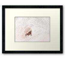 Black house spider, Western Australia  Framed Print
