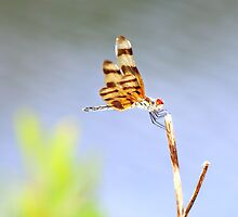 Halloween Pennant by Laurie Puglia