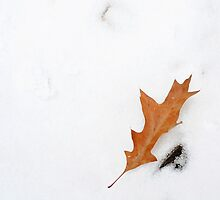 Winter leaf by Shilpa Shenoy