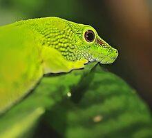 Close up. by bluetaipan