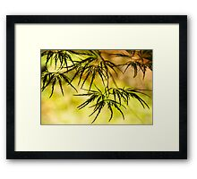 Beyond Clarity Framed Print