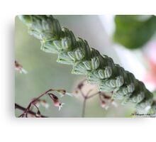 WILD GRASS MACRO Canvas Print