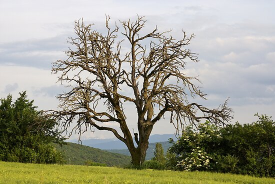 An old tree in the fields by Patrick Morand