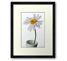 White Chrysanthemum 1 Framed Print