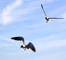 Gullible (Terns & Conditions Apply) by EwanJ