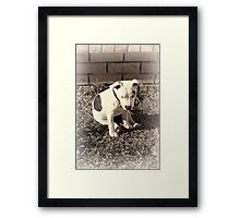 I'm Being as Still as I Can Be Framed Print