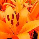 REALLY Orange Lilies by WildestArt