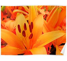 REALLY Orange Lilies Poster