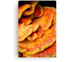 Pandorica Fungus Canvas Print