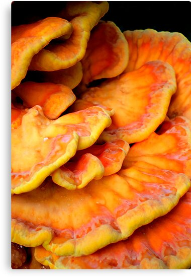 Pandorica Fungus by Bradley Old