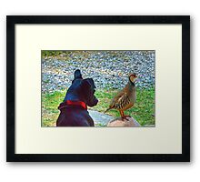 The Dog And Partridge Framed Print