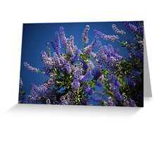 California Lilac Greeting Card