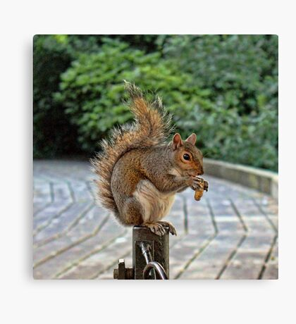 Peanuts for lunch Canvas Print