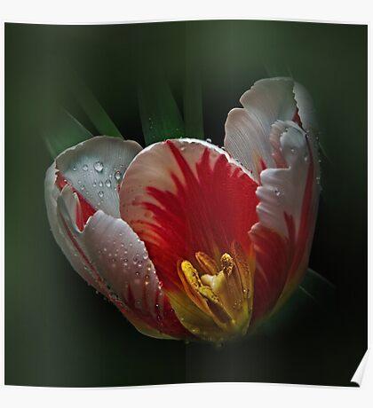 The Tulip's light Poster