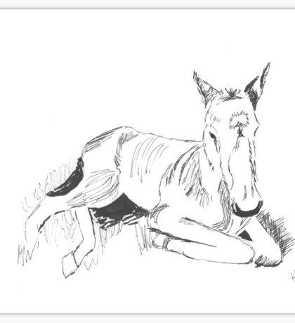 Resting foal Sticker