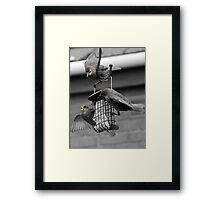 Lunch Time for the Birds Framed Print