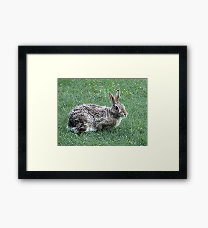 Good Neighbor Framed Print