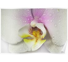 My Orchid Poster