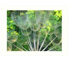 Dried Oyster Flower  Art Print