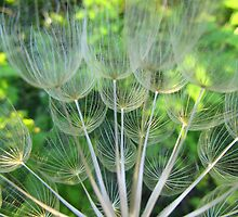 Dried Oyster Flower  by Lynn Gedeon