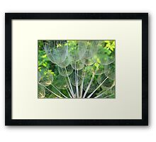 Dried Oyster Flower  Framed Print