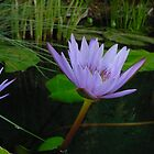 Purple Beauty by Monte Roberts