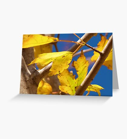 Fall Yellows and Reds Greeting Card
