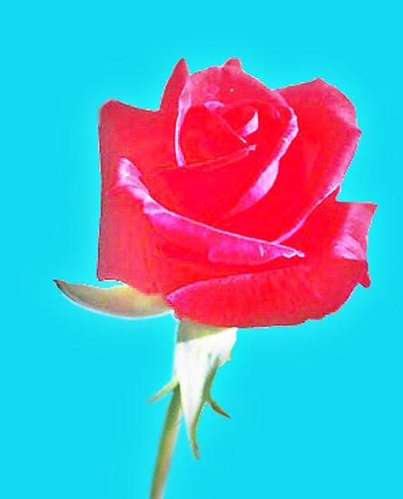 Rose by Khepera
