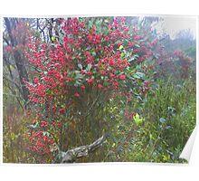 very berry bush Poster