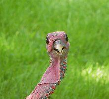 Let's talk  Turkey! by irmajxxx