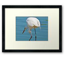 Hunting White Crain Framed Print