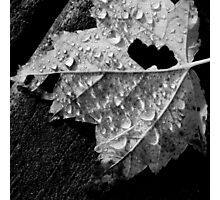 Fallen Leaf in the Rain Photographic Print
