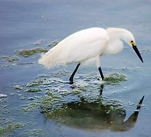 Egret with reflection by loiteke
