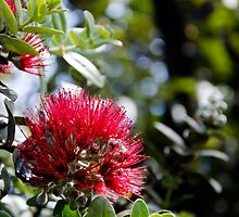 Ohia Lehua - Hawaii Volcanoes National Park, Hawaii by Jason Heritage