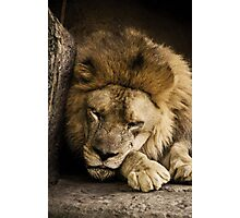 Napping Photographic Print